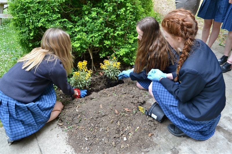Students planting in the school grounds