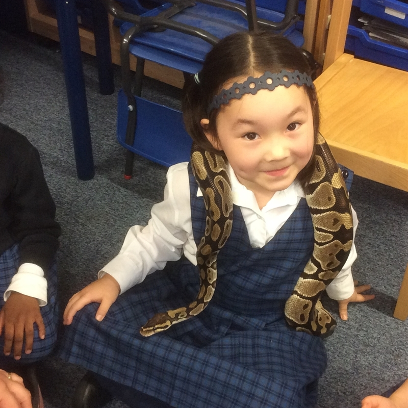 Junior School Animal Experience