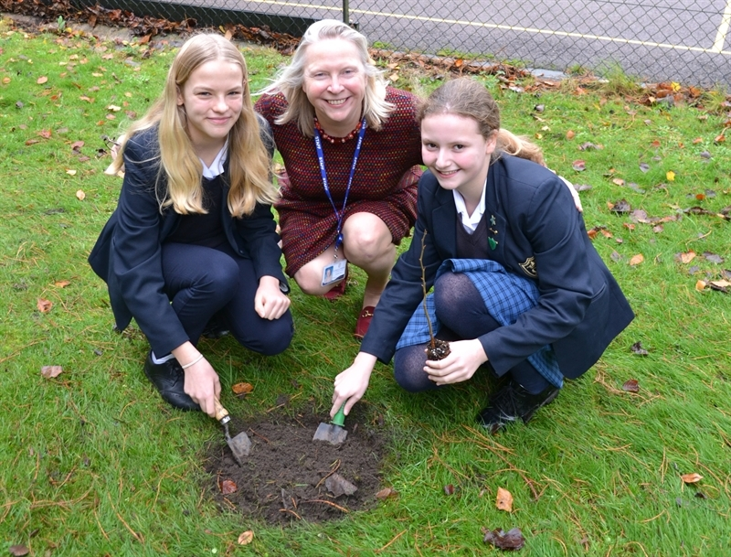 Eco Councils plant saplings for National Tree Week